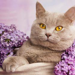 1 марта - День кошек в России!
