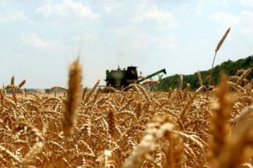 Алексей Текслер: Южноуральские аграрии получат господдержку на сумму свыше 4 млрд рублей.
