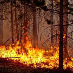 На территории Южного Урала введен особый противопожарный режим