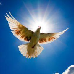 Мастер-класс «Голубь мира! Голубь Победы!»