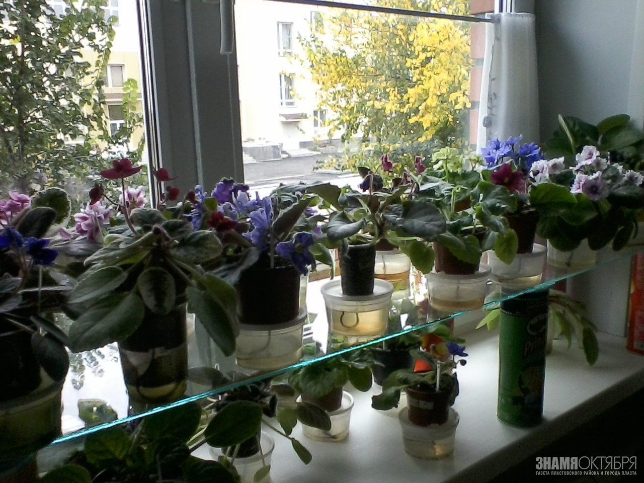 Жизнь среди цветов