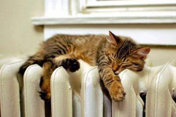 Осень. Хочется тепла