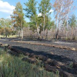 Пожар в Санарском бору